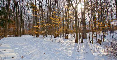 Photograph - Winter Walk by Laurel Best
