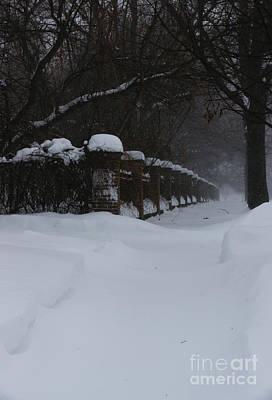Photograph - Winter Walk by Linda Shafer