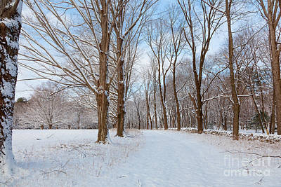Photograph - Winter Walk by Susan Cole Kelly