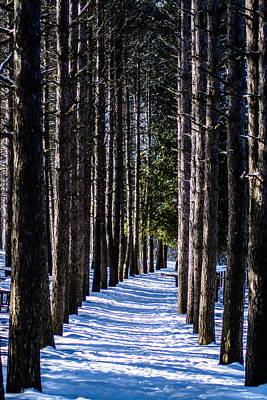 Winter Walkway Art Print by Randy Scherkenbach