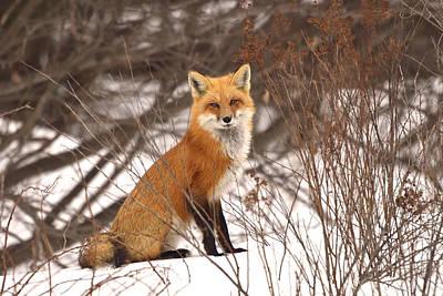 Photograph - Winter Wanderer by Joshua McCullough