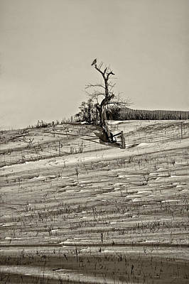 Ontario Photograph - Winter Watcher Sepia by Steve Harrington