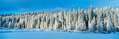 Winter Wawona Meadow Yosemite National Art Print by Panoramic Images