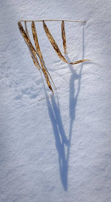 Photograph - Winter Weed Sundial by Christopher Burnett