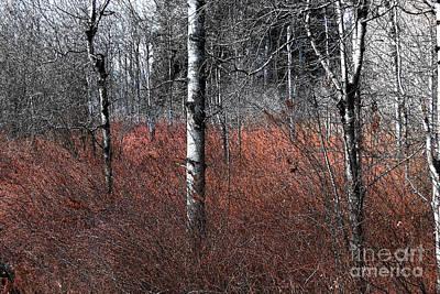Birch Trees Painting - Winter Wetland I by Jani Freimann