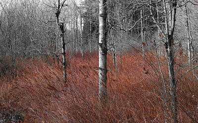 Photograph - Winter Wetland by Jani Freimann