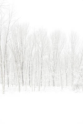 Unable Photograph - Winter White Out by Karol Livote