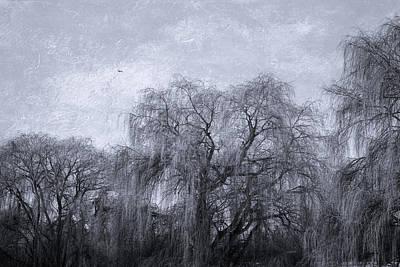 Photograph - Winter Willows by Kathy Bassett