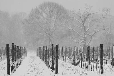 Winter Wine Art Print by Steven Macanka