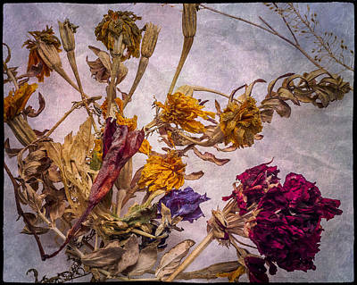 Photograph - Winter Withered Flowers by John Brink