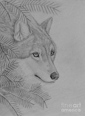 Drawing - Winter Wolf by Peggy Miller