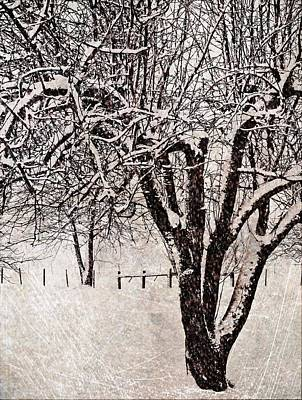 Winter Wonder 1 Art Print