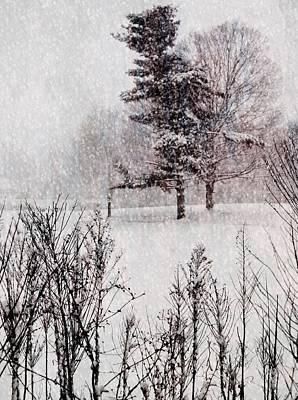 Winter Wonder 2 Art Print by Maria Huntley