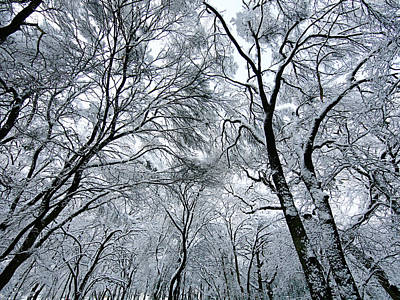 Winter Wonder Art Print by Jeff Klingler