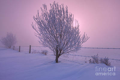 Snow Drifts Photograph - Winter Wonder Land by Dan Jurak