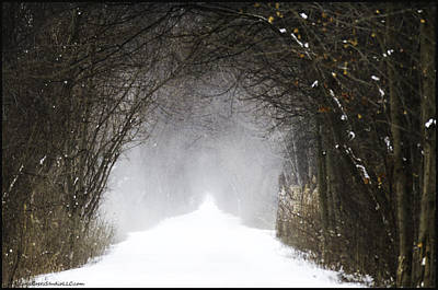 Vine Photograph - Winter Wonder Snow Tunnel Of Trees by LeeAnn McLaneGoetz McLaneGoetzStudioLLCcom