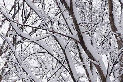 Photograph - Winter Wonderland 1 by Ron Read