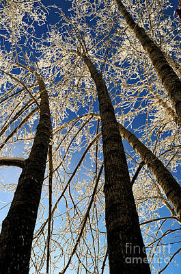 Photograph - Winter Wonderland 8 by Terry Elniski