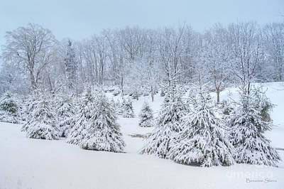 Trees In Snow Photograph - Winter Wonderland In West Virginia by Benanne Stiens