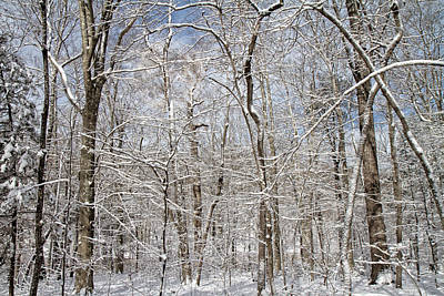 Snowstorm Photograph - Winter Wonderland by Betsy Knapp