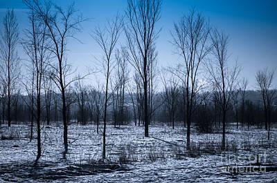Art Print featuring the photograph Winter Wonderland by Bianca Nadeau