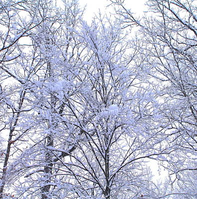 Print featuring the photograph Winter Wonderland by Candice Trimble