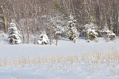 Art Print featuring the photograph Winter Wonderland by Dacia Doroff