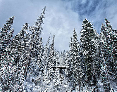 Royalty-Free and Rights-Managed Images - Winter Wonderland by Darren White