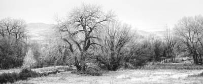 Photograph - Winter Wonderland by David Waldrop