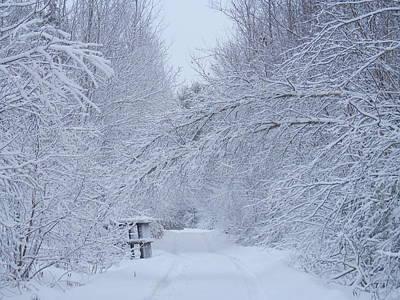 Photograph - Winter Wonderland by Heather Sylvia