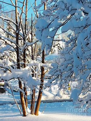 Photograph - Winter Wonderland by Judy Via-Wolff