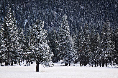 Photograph - Winter Wonderland by Melanie Lankford Photography