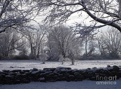 Photograph - Winter Wonderland by Michelle Welles