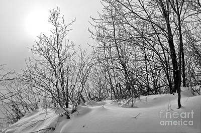 Photograph - Winter Wonderland Monochrome by Terry Elniski