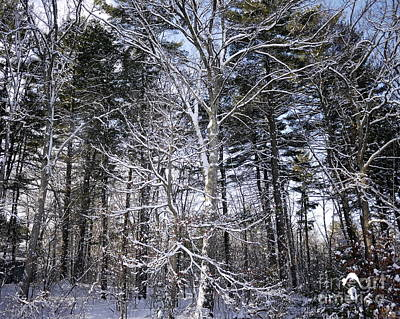 Photograph - Winter Wonderland by Nancie DeMellia
