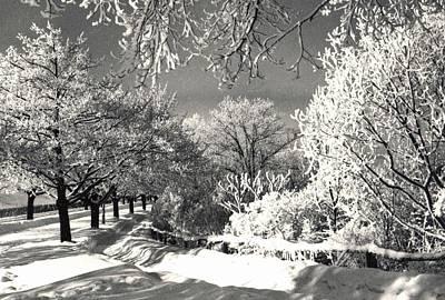 Winter Wonderland Print by Pat Mchale