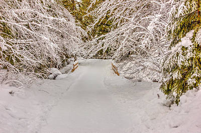 Winter Wonderland Art Print by Pati Photography