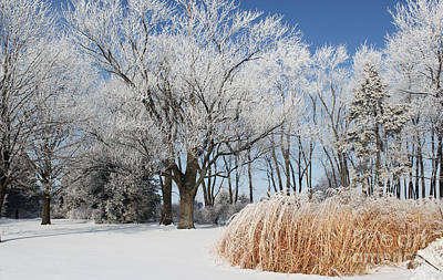 Photograph - Winter Wonderland by Robyn Saunders