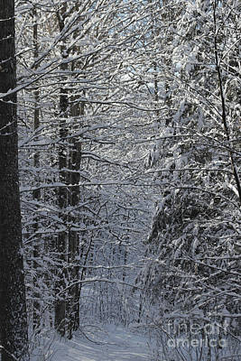Photograph - Winter Wonderland by Spirit Baker