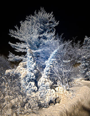 Print featuring the photograph Winter Wonderland by Steve Zimic