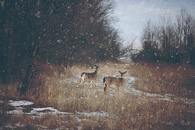 Winter Wonders Print by Carrie Ann Grippo-Pike