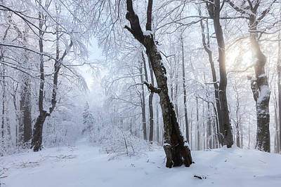 Winter Wood Art Print by Evgeni Dinev