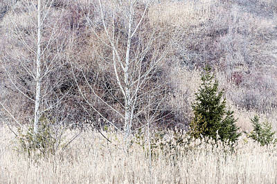 Bluff Photograph - Winter Woodland With Subdued Colors by Elena Elisseeva