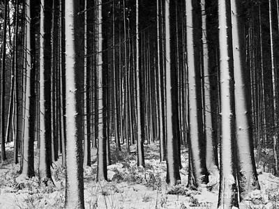 Mans Best Friend - Winter Woodlands by Heiko Koehrer-Wagner