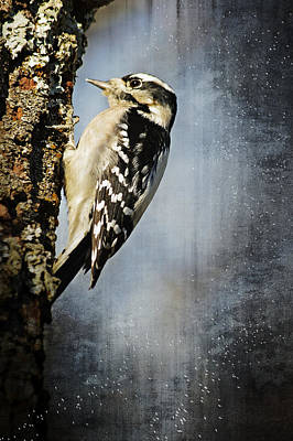 Winter Woodpecker Art Print