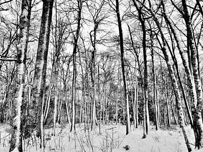 Photograph - Winter Woods by CJ Rhilinger