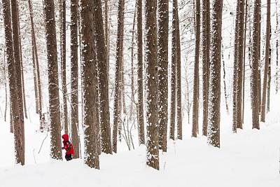 North Woods Snow Snowy Woods Winter Woods Duluth Lake Superior Winter Photograph - Winter Frolic by Mary Amerman