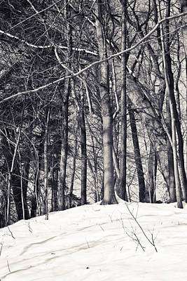 Photograph - Winter Woods by Sara Frank