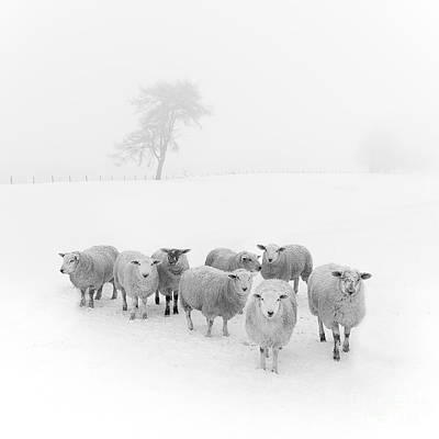 Black White Photograph - Winter Woollies by Janet Burdon