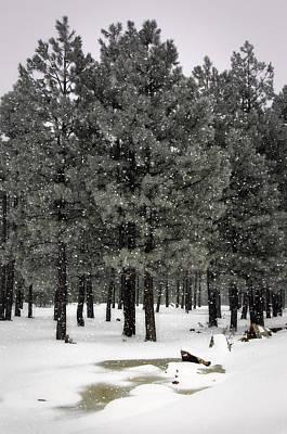 Photograph - Winter Worderland  by Saija  Lehtonen